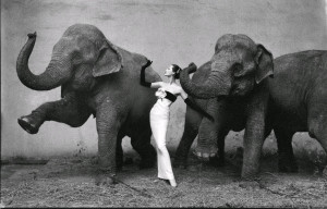 Davima con elefantes - Richard Avedon
